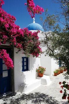 Agios Artemios church, Santorini The white wash and pink bougainvillea are signature to the beauty of this region