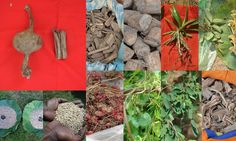Medicinal Rice based Tribal Medicines for Diabetes Complications and Metabolic Disorders (TH Group-577) from Pankaj Oudhia's Medicinal Plant Database