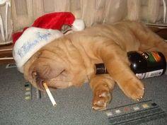 drunk dog picture | The Drunk Dog - Jokeroo