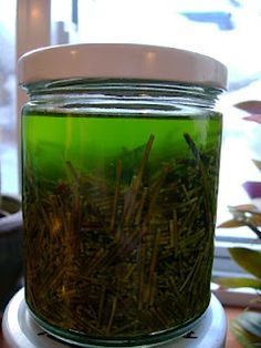 pine needles in rubbing alcohol for sore muscles, joint pain, and chest and sinus congestion