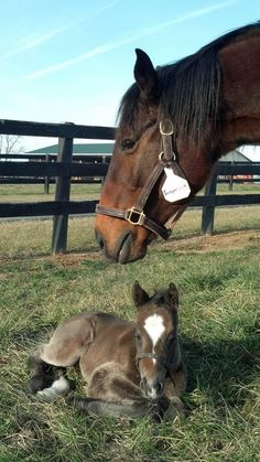 Check out Northview Stallions' first foal born in Pennsylvania on 1/2/13 by Silver Train and out of Trespassing, owned by Lickety Split Services, Inc. What a face!