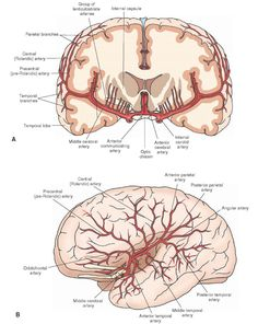 Major branches of the middle cerebral artery. (A) Coronal section showing the lenticulostriate, the precentral (pre-Rolandic), central (Rolandic), and the parietal and temporal branches. The internal carotid, anterior cerebral, and anterior communicating arteries; the optic chiasm; the internal capsule; and the temporal lobe of the brain are shown for orientation purposes. (B) Top view showing the anterior, middle, and posterior temporal arteries; the angular artery; the posterior and…