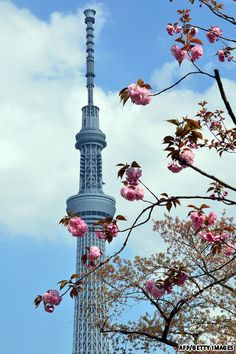The world's second highest building, the Tokyo Sky Tree (R), is pictured behind cherry blossoms at a Tokyo park on April (YOSHIKAZU TSUNO/AFP/Getty Images) Japan Landscape, Tokyo Skytree, Visit Tokyo, Sea Of Japan, Japan Travel, Japan Trip, Island Nations, Tokyo Japan, Amazing Destinations