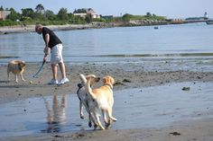 Union reservoir dog beach longmont colorado you and your dog may you and your pup can find dog friendly beaches in fairfield ct your pooch will enjoy digging in the sand and romping in the waves at the dog friendly solutioingenieria Images