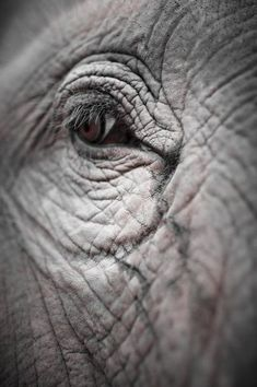 Up close photo of the eye of the #Elephant.