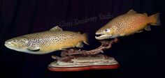 Brown trout mount; #flyfishing #taxidermy
