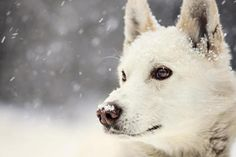 Dog - (#122563) - High Quality and Resolution Wallpapers on hqWallbase.com