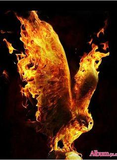 great fire in wings