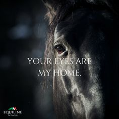 Your eyes are my home. #love #equestrian #horse