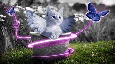 Gato, Gatinho, Natureza, Doce, Bonito, Mundo Animal