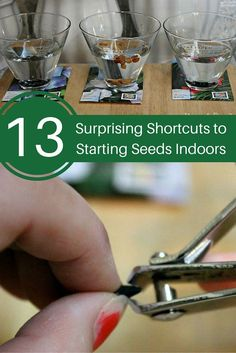 13 surprising shortcuts to starting seeds indoors