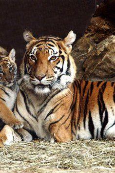 Henry Doorly Zoo in Omaha is one of the best zoos in America!
