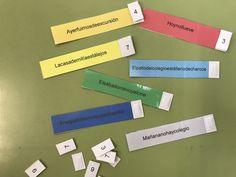 Juego manipulativo para trabajar la separación de palabras en la oración Body Systems, Coping Skills, Language, Classroom, Teacher, Activities, School, Ideas Para, Writing