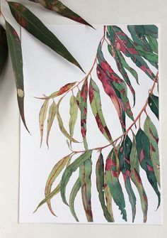 Australian Eucalyptus leaves - bold & beautiful print of the original watercolour painting by Zoya Makarova Watercolor Walls, Watercolor Flowers, Watercolour Painting, Watercolour Illustration, Watercolor Portraits, Watercolours, Plant Sketches, Flower Sketches, Australian Native Flowers