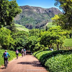 Ebike Cape Town - Discover the Cape on Electric Bikes - Photos Bike Photo, Business Help, Cape Town, Electric, Country Roads, Photos, Pictures