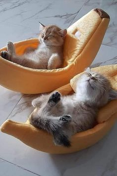 Cute Baby Cats, Cute Cats And Kittens, Cute Little Animals, Cute Funny Animals, Kittens Cutest, Cute Dogs, Pretty Cats, Beautiful Cats, Animals Beautiful