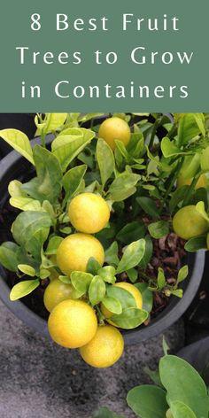 Home Vegetable Garden, Fruit Garden, Edible Garden, Herbs Garden, Dwarf Fruit Trees, Growing Fruit Trees, Fruit Plants, Growing Plants, Container Gardening Vegetables