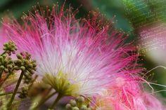 Yağmur Ağaç, Çiçek, Tebrik Kartı, Arka Plan