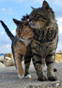 【あなたはどの子がお好み?】かわいい猫画像108枚貼ったった!4月1日やしな!