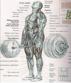 Why the deadlift is the best gym exercise.