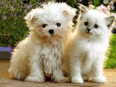 Fancy - Dog & cat