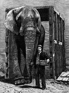 On April Jumbo the elephant came to America. His life began in the wilds of Abysinnia. He lived in zoos in Paris and London before he was purchased by P. And he died horribly in a dreadful encounter with a locomotive in St Thomas, Ontario Jumbo The Elephant, Wild Elephant, Pt Barnum, African Bush Elephant, Circo Vintage, Today In History, Big Top, Vintage Circus, Gentle Giant