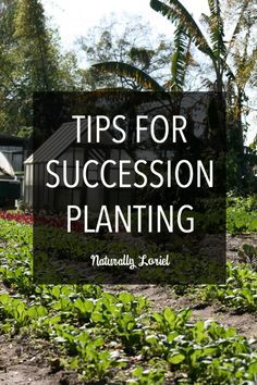 Succession planting is a great way take advantage of your garden space and to ensure the largest produce yields possible.