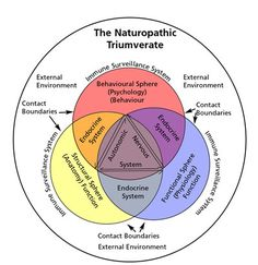 Core of Naturopathic Healthy implemented at Healthy Being Wellness Center in St. Pete FL with Melissa Gallagher, Naturopathic Physician. We accept phone consultation. Homeopathic Medicine, Holistic Medicine, Holistic Healing, Natural Medicine, Alternative Health, Alternative Medicine, Naturopathic Physician, Holistic Practitioner, Health Heal