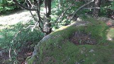 Blutschüssel  St Oswald Plants, Granite Counters, Plant, Planets