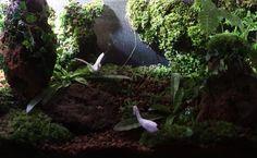 Dark forrest terrarium