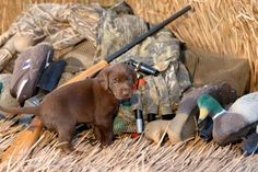How To Train Dog To Hunt | Survival Skills by Pioneer Settler at http://pioneersettler.com/train-a-hunting-dog-to-retrieve/