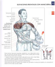 Elevaciones frontales con una mancuerna | EjerciciosMusculación.es