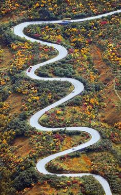 Autumn leaves, Tateyama Kurobe Alpen Route, Toyama, Japan: