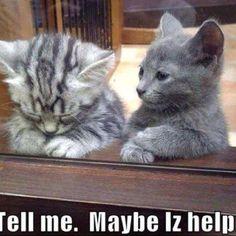 cute kitties :)