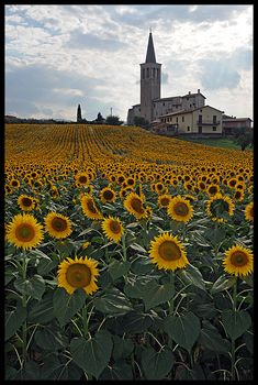 I so want to see the sunflowers! Spoleto, Italy, province of Perugia Umbria Oh The Places You'll Go, Places To Travel, Places To Visit, We Are The World, Wonders Of The World, Umbria Italy, Perugia Italy, Sunflower Fields, Sunflower Season