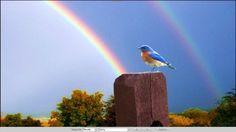 Rainbow HD Wallpapers, Wallpapers For Desktop, Android, Iphone,nature wallpapers,anime wallpapers,car wallpapers