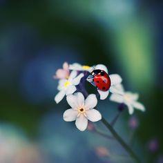 Ladybird Wallpaper For Iphone : Flowers Wallpaper Ladybird Images, Ladybird Ladybird, Beautiful Birds, Beautiful Gardens, Ladybug Party, Ladybug Picnic, Love Bugs, Happy Animals, Macro Photography