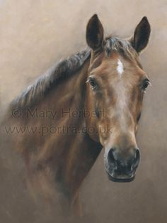 Mary Herbert is an artist based in Ceredigion, West Wales specialising in pastel portraits of horses and dogs. Horse Drawings, Animal Drawings, Art Drawings, Pretty Horses, Beautiful Horses, Scratchboard Art, Horse Artwork, Watercolor Horse, Horse Portrait