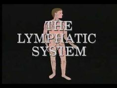 The Lymph System