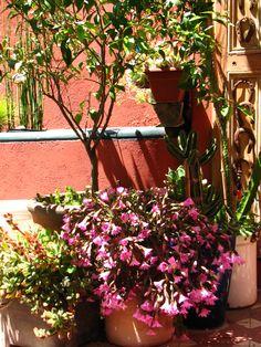 Jardin en flor