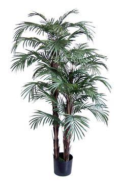 Künstliche Phönix Roebelinii-Palme ca. 150cm Durch die vielen Wedel an den unterschiedlich hohen Echtholzstämmen sieht unsere künstliche Palme besonders buschig aus und wird so zur idealen Solitärpflanze für jedes Heim und Büro.