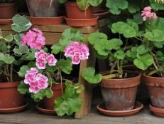 How and When to Plant Geraniums >> http://www.diynetwork.com/how-to/outdoors/gardening/how-and-when-to-plant-geraniums?soc=pinterest
