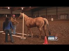 Equine assisted therapy helps overcome social anxieties - YouTube