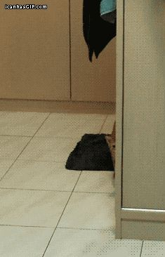 Curiosity scared the cat...