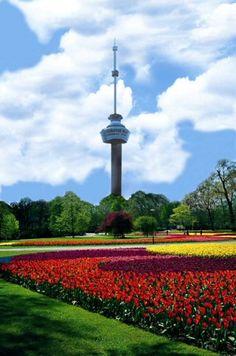 Voorjaar in het Park bij de Euromast.