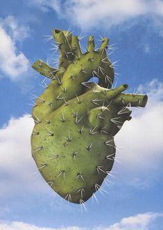 """"""" Dans leur coeur, il y a des cactus... """" ( Jacques Dutronc )"""