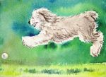 PRIVATE COLLECTION Old English Sheepdog ACEO