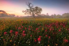 Field of vibrant wildflowers during Texas wildflower season in last month. Early mornings would always start off with some nice fog and mist that really added some nice atmospheric conditions. It was kind of scary when it came to some of the landowners but I didi survive.  Thanks for looking !