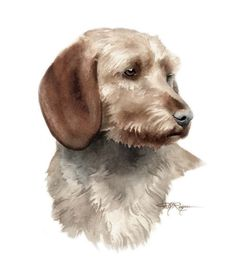 BASSET FAUVE DE BRETAGNE Dog Art Print Signed by by k9artgallery