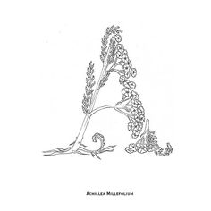 Ana Bangueses / Illustrated typography print - Herbarium Typography